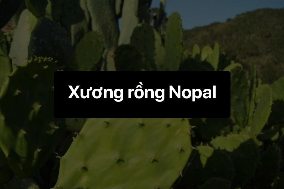 Xương rồng Nopal